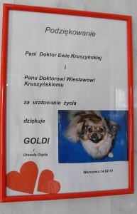 podziekowanie_goldi